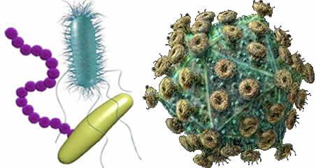 virus_bacteria